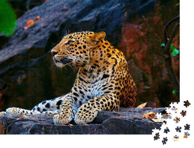 "Puzzle 1000 Teile ""Indischer Leopard, Panthera pardus fusca, Ranthambhore Tiger Reserve, Rajasthan"""