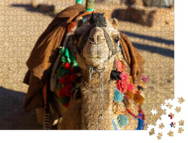 """Puzzle 1000 Teile """"Dromedar Kamel vor dem Sand der heißen Wüste, Ägypten, Sinai"""""""