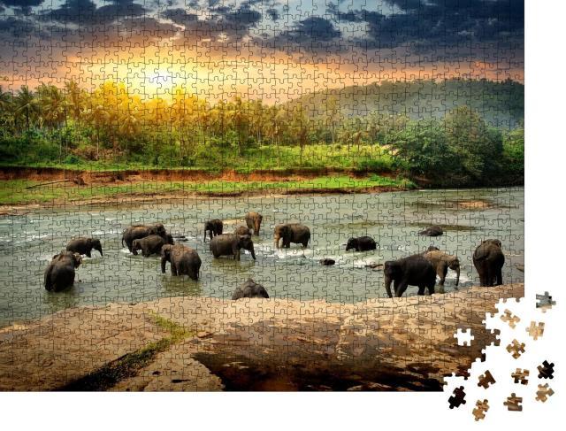 """Puzzle 1000 Teile """"Elefantenherde beim Baden im Dschungel von Sri Lanka"""""""