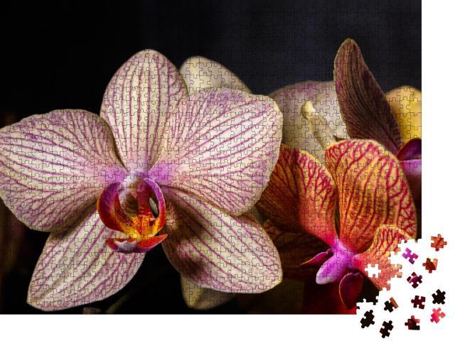 """Puzzle 1000 Teile """"Wunderschöne gelb-rosa Orchideenblüte in Nahaufnahme"""""""
