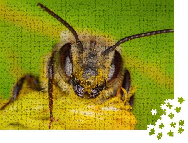 """Puzzle 1000 Teile """"Eine Wildbiene sammelt Pollen, Quebec, Kanada"""""""