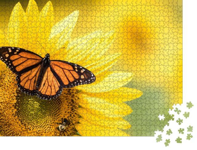 """Puzzle 1000 Teile """"Monarchfalter, Danaus Plexippus, auf einer Sonnenblume"""""""