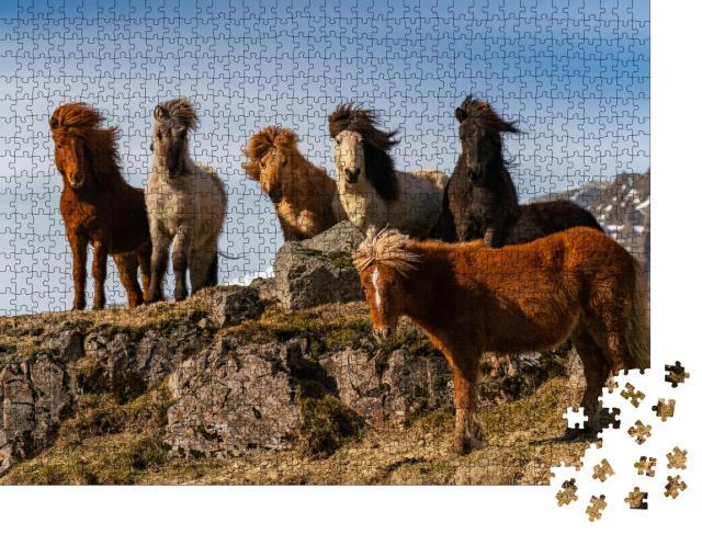 """Puzzle 1000 Teile """"Eine Herde von Island-Pferden im rauhen Wind"""""""