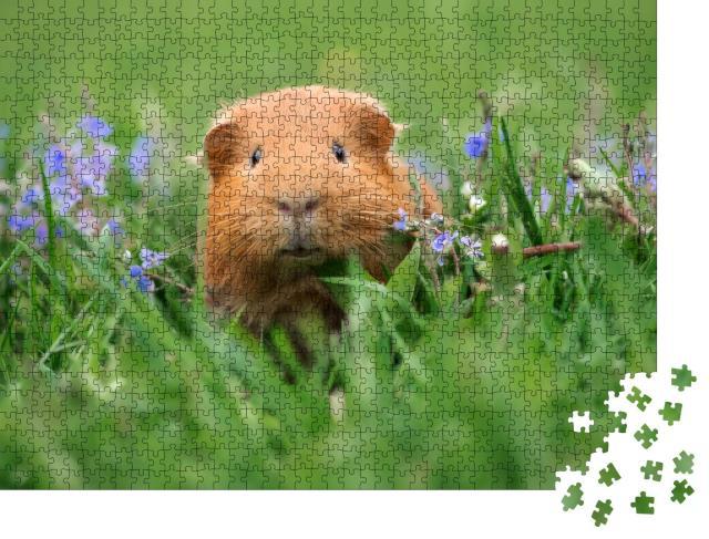 """Puzzle 1000 Teile """"Süßes Meerschweinchen posiert auf Gras"""""""