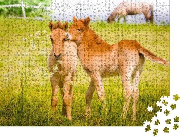 """Puzzle 1000 Teile """"Spielende Fohlen auf der Wiese"""""""