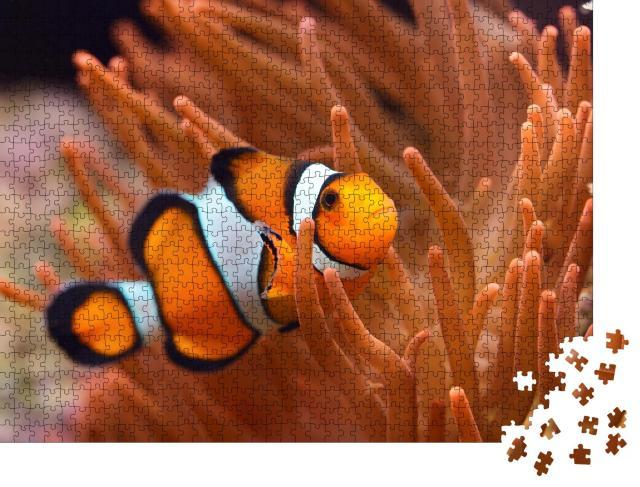 "Puzzle 1000 Teile ""Amphiprion Ocellaris: Clownfisch im Meerwasseraquarium"""