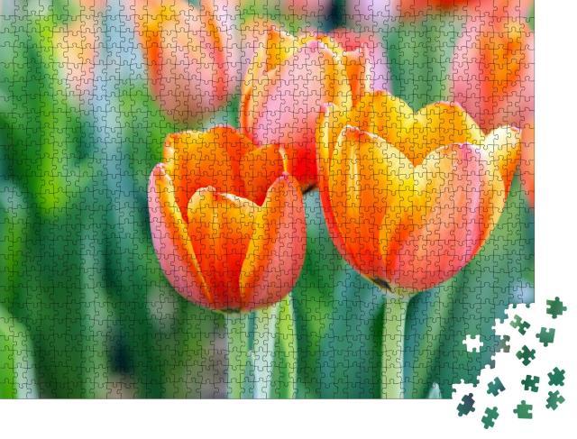 """Puzzle 1000 Teile """"Leuchtende Tulpen"""""""