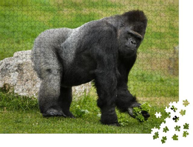 """Puzzle 1000 Teile """"Westlicher Flachland-Gorilla"""""""