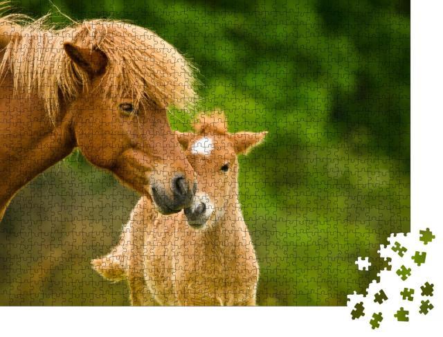 """Puzzle 1000 Teile """"Wunderschönes fuchsfarbenes Island-Fohlen und seine Mutter"""""""