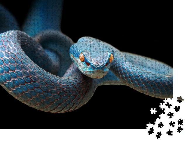 """Puzzle 1000 Teile """"Blaue Viper: Schlange auf Zweig bereit, Beute anzugreifen"""""""