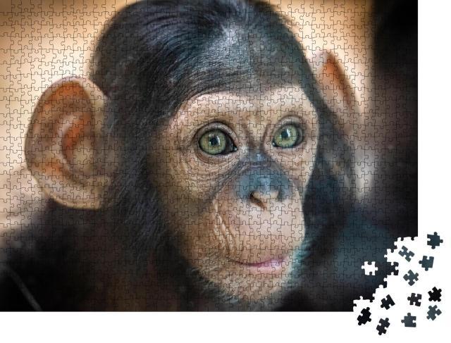 """Puzzle 1000 Teile """"Porträt eines Schimpansenbabys in Pilsen, Tschechische Republik"""""""