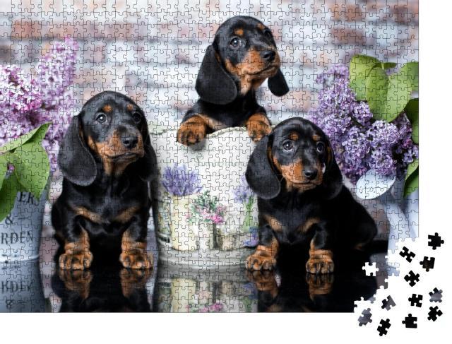 """Puzzle 1000 Teile """"Porträt eines schönen Dackelwelpen"""""""