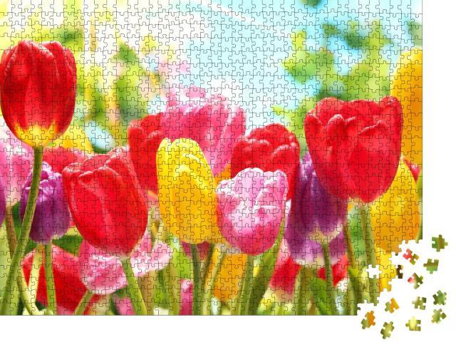 """Puzzle 1000 Teile """"Frische bunte Tulpen im warmen Sonnenlicht"""""""