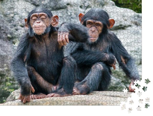 """Puzzle 1000 Teile """"Zwei verspielte Schimpansenbabys Seite an Seite"""""""