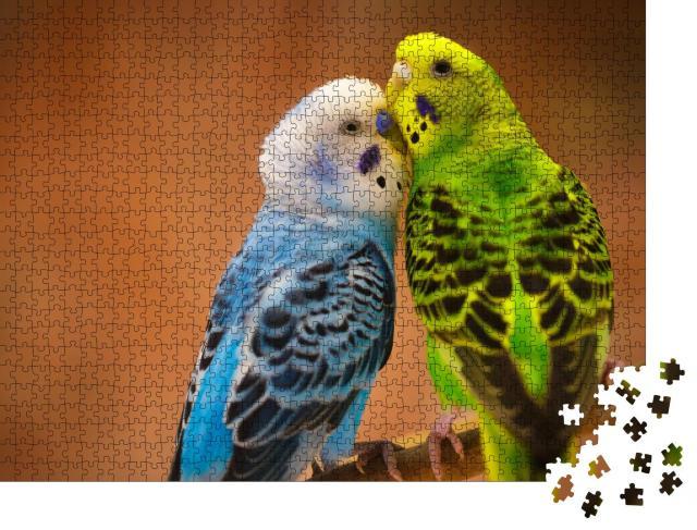 """Puzzle 1000 Teile """"Blauweißer und gelbgrüner Wellensittich auf einem Ast vor unscharfem Hintergrund"""""""