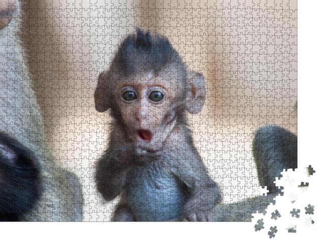 """Puzzle 1000 Teile """"Ein niedlicher Affe lebt im Wald, Thailand"""""""