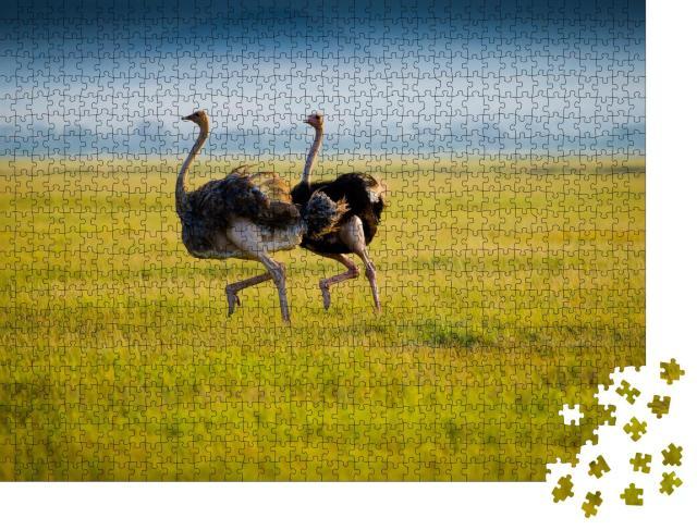 """Puzzle 1000 Teile """"Zwei afrikanische Strauße während dem Laufen im Gras"""""""