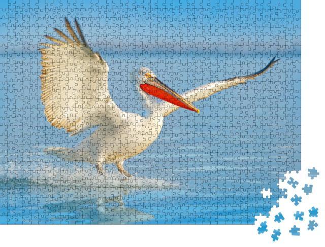 """Puzzle 1000 Teile """"Krauskopfpelikan bei seiner Landung im See"""""""