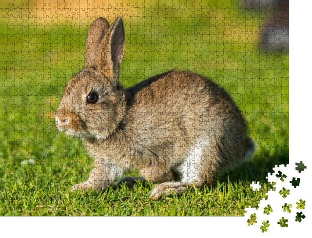 "Puzzle 1000 Teile ""Kaninchen, Hase"""