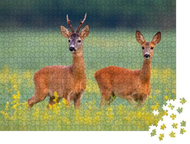 """Puzzle 1000 Teile """"Rehwild auf einem Feld voller gelben Wildblumen"""""""