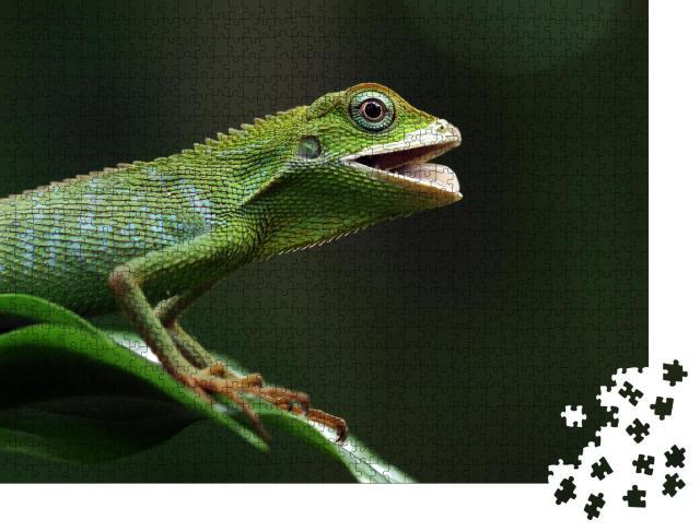 """Puzzle 1000 Teile """"Smaragdeidechse sonnt sich auf einem Ast,  Jubata-Eidechse"""""""