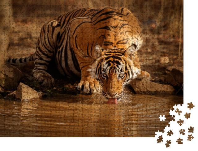 """Puzzle 1000 Teile """"Tiger in der Natur: Tigermännchen trinkt Wasser in Rajasthan, Indien"""""""