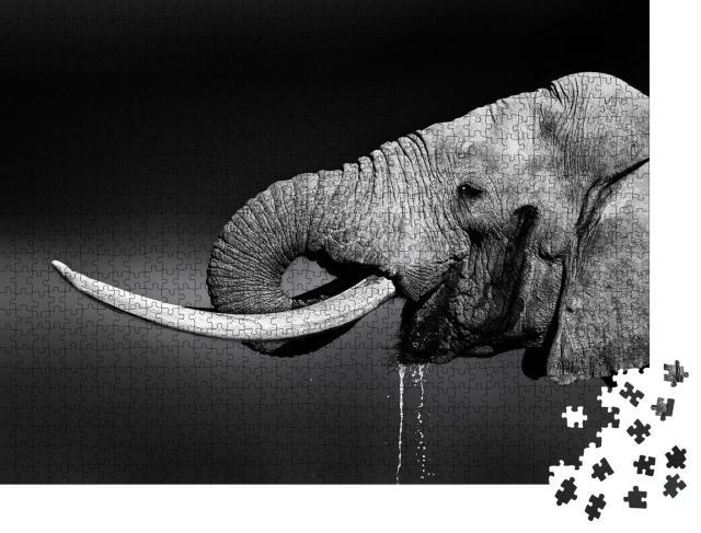 """Puzzle 1000 Teile """"Elefantenbulle beim Wassertrinken, schwarz-weiß"""""""