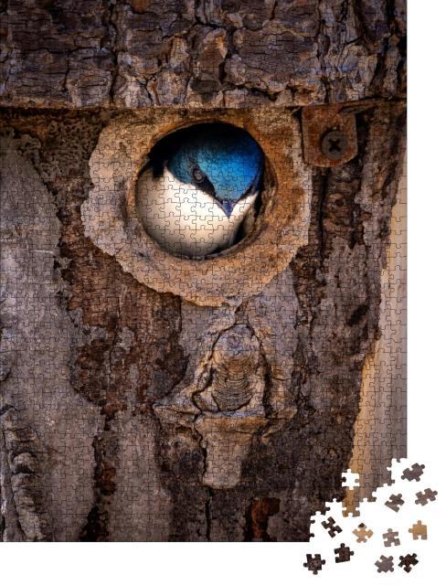 """Puzzle 1000 Teile """"Brutzeit: Eine Rauchschwalbe wagt sich aus ihrem Nest im Baumstamm"""""""