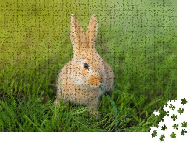 """Puzzle 1000 Teile """"Niedliches Kaninchen kauend im grünen Gras"""""""