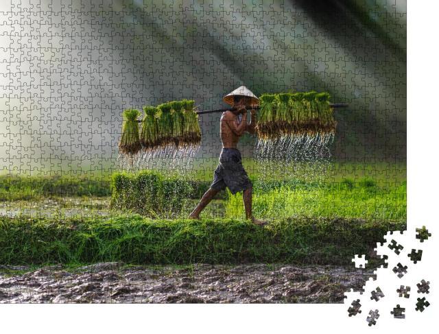 """Puzzle 1000 Teile """"Reis wird gepflanzt: Landwirtschaft in Vietnam, Reisfeld"""""""