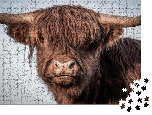 """Puzzle 1000 Teile """"Portrait eines schottischen Hochlandrindes"""""""
