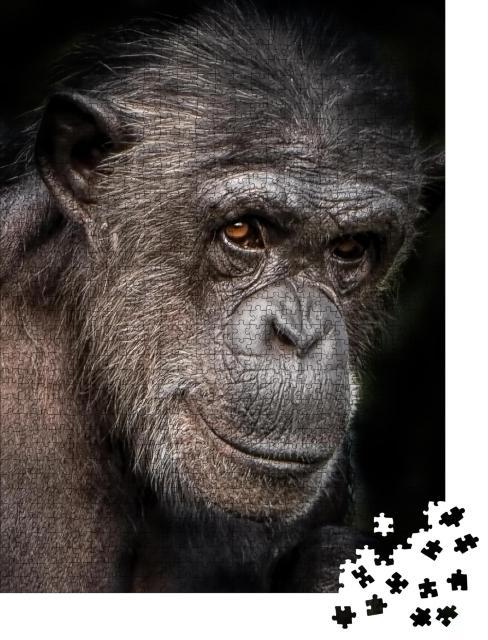 """Puzzle 1000 Teile """"Ein Porträtfoto eines weiblichen Schimpansen, Nahaufnahme"""""""
