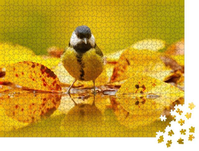 """Puzzle 1000 Teile """"Kleine Kohlmeise im Herbstlaub"""""""