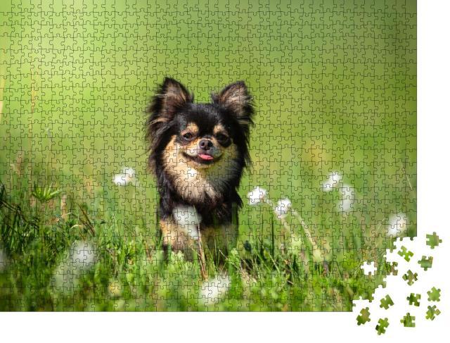 """Puzzle 1000 Teile """"Chihuahua-Hund auf einer sonnigen Lichtung"""""""