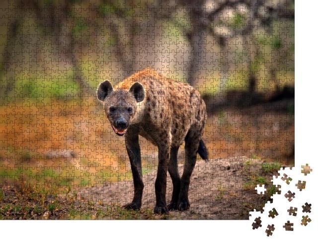 """Puzzle 1000 Teile """"Tüpfelhyäne auf der Suche nach Beute, Okavango, Botswana"""""""
