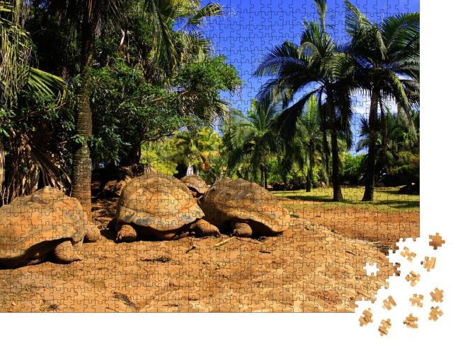 """Puzzle 1000 Teile """"Uralbe Riesenschildkröten auf Mauritius"""""""