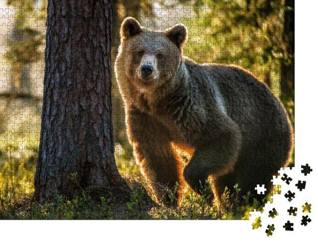"""Puzzle 1000 Teile """"Braunbär im Sommerwald"""""""
