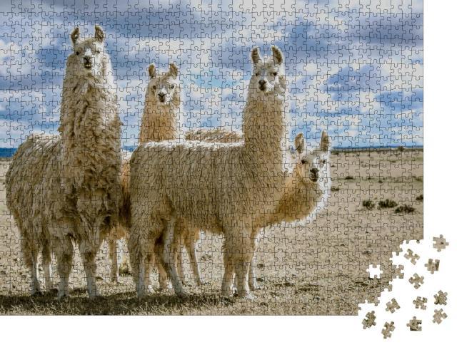 """Puzzle 1000 Teile """"Lamagruppe in ihrem natürlichen Lebensraum"""""""