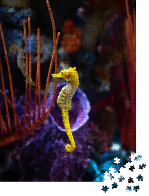 """Puzzle 1000 Teile """"Seepferdchen im Aquarium"""""""
