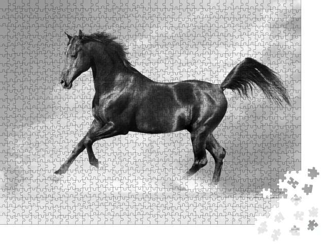 """Puzzle 1000 Teile """"Schwarzer Araber, Pferd im Winter"""""""