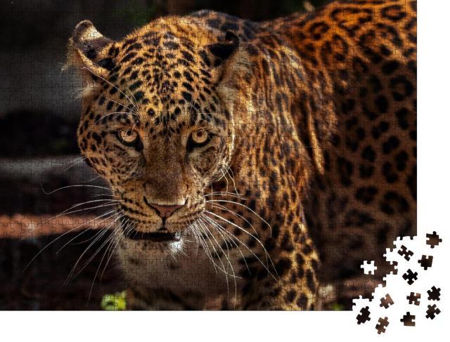 """Puzzle 1000 Teile """"Attraktives Bild eines starken Jaguars als Jäger"""""""