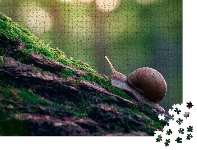 """Puzzle 1000 Teile """"Weinbergschnecke an der Rinde eines mit Moos bewachsenen Baumes"""""""