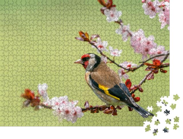 """Puzzle 1000 Teile """"Bunter Stieglitz auf einem Blütenzweig"""""""