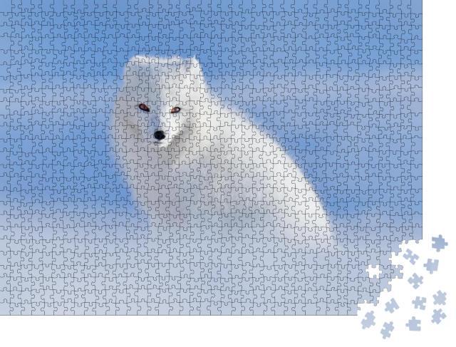 """Puzzle 1000 Teile """"Weißer Polarfuchs im seinem natürlichen Lebensraum, Svalbard, Norwegen"""""""
