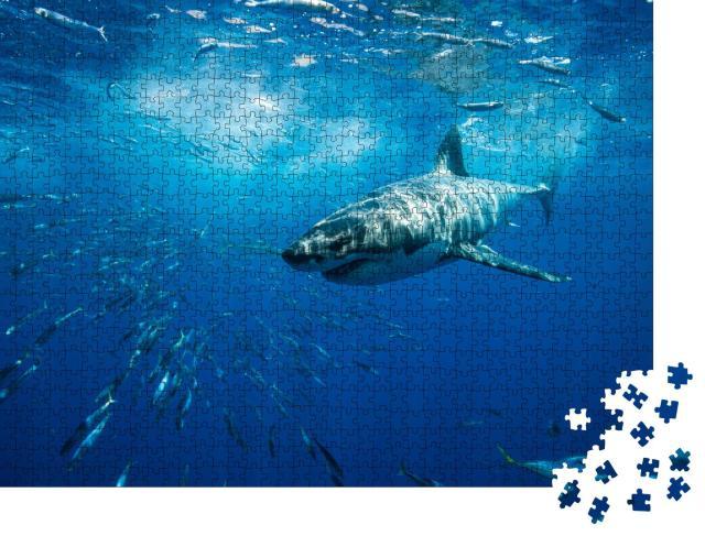 """Puzzle 1000 Teile """"Majestätischer weißer Hai, Guadalupe Island, Mexiko"""""""