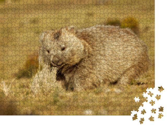 """Puzzle 1000 Teile """"Wombat im abendlichen Tasmanien"""""""