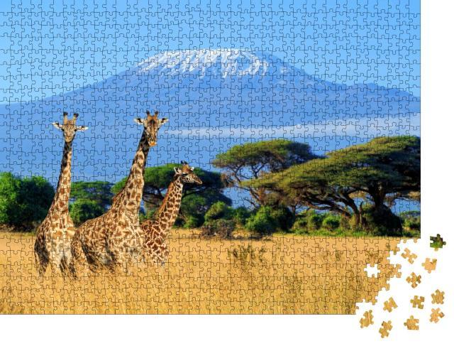 """Puzzle 1000 Teile """"Giraffen am Kilimandscharo, Bild aus dem Nationalpark in Kenia"""""""