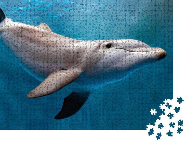 """Puzzle 1000 Teile """"Delphin unter Wasser auf blauem Ozean"""""""