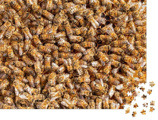 """Puzzle 1000 Teile """"Arbeitshonigbienen auf einem Rahmen aus einem Bienenstock"""""""