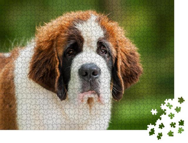 """Puzzle 1000 Teile """"Porträt eines Bernhardinerwelpen"""""""